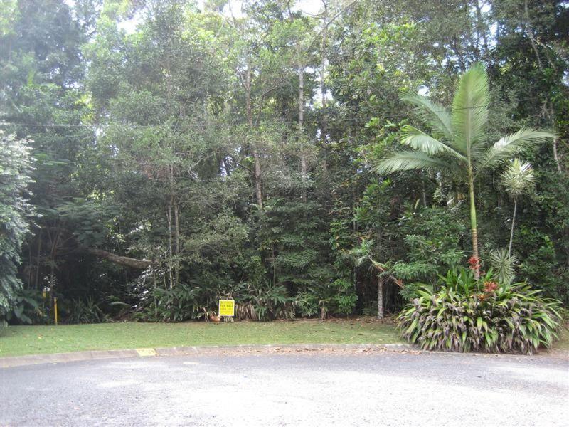Rainforest Haven